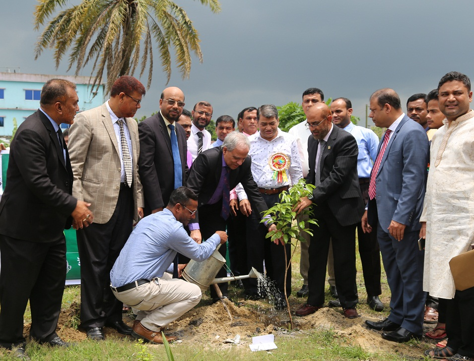 A Month-long Tree Plantation Project
